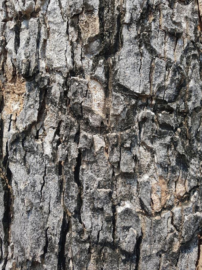 Bruine Textuur 02 van de Boomschors achtergrondbarst royalty-vrije stock foto's