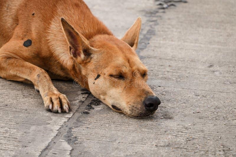 Bruine Thaise dakloze hond royalty-vrije stock afbeeldingen