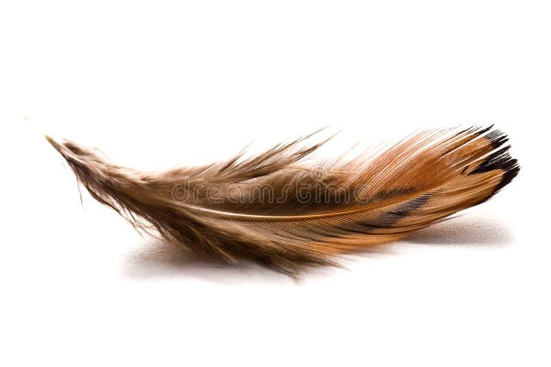 Bruine veer stock afbeelding