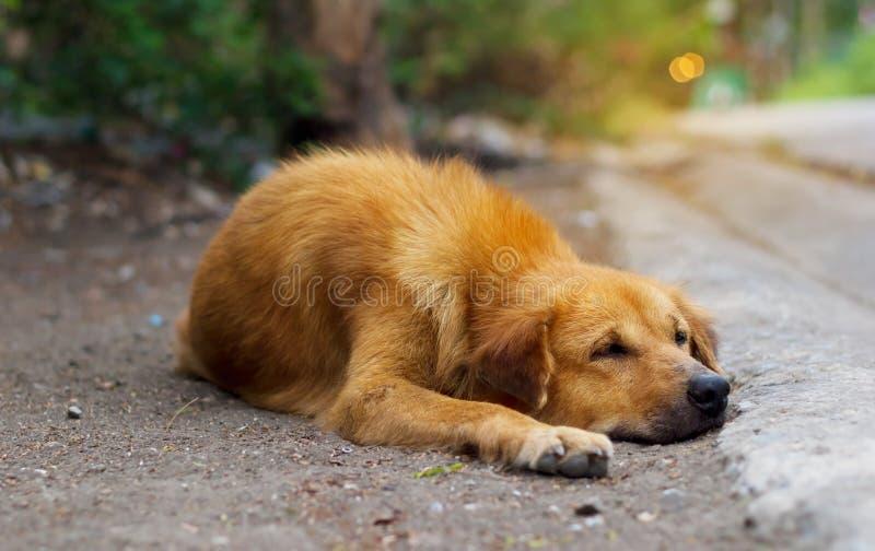 Bruine verdwaalde hond op straatachtergrond stock foto's