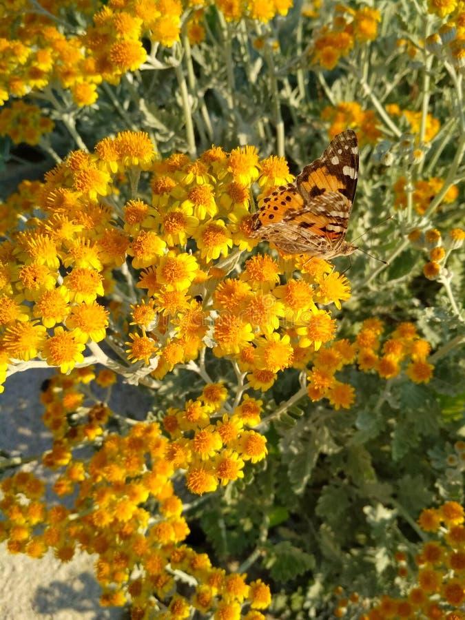 Bruine vlinder in kleine gele bloemen royalty-vrije stock foto's