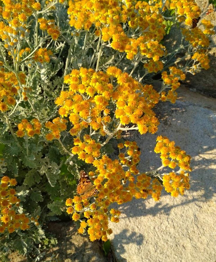 Bruine vlinder in kleine gele bloemen royalty-vrije stock afbeeldingen