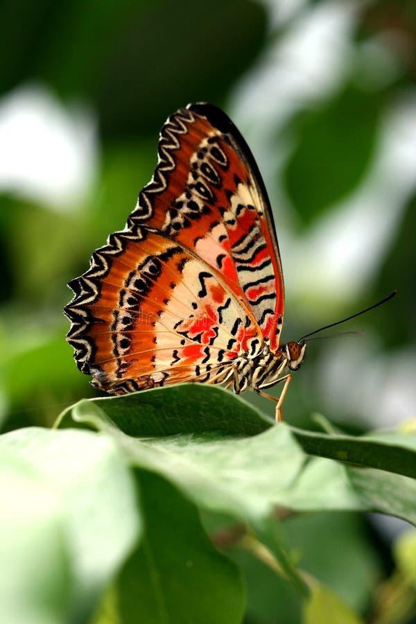 Bruine vlinder op groen blad stock afbeelding