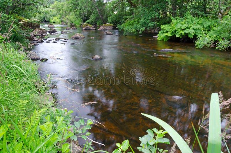 Bruine Zweedse rivier royalty-vrije stock afbeelding