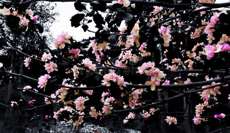 Bruit floral image libre de droits