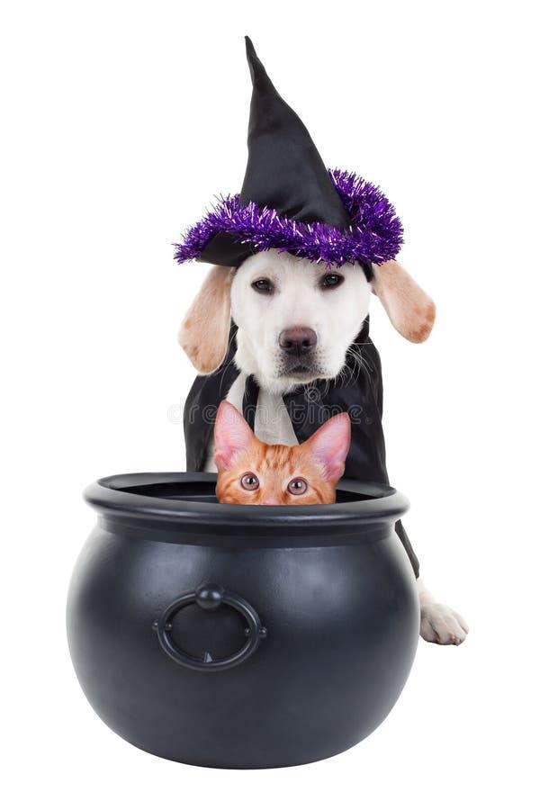 Bruja de Víspera de Todos los Santos con el gato imagen de archivo libre de regalías