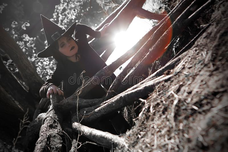 Bruja en bosque acentuado negro del sombrero imagen de archivo