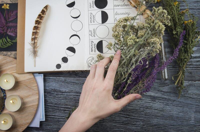 Bruja que prepara los ingredientes para el ritual de la luna imagen de archivo libre de regalías