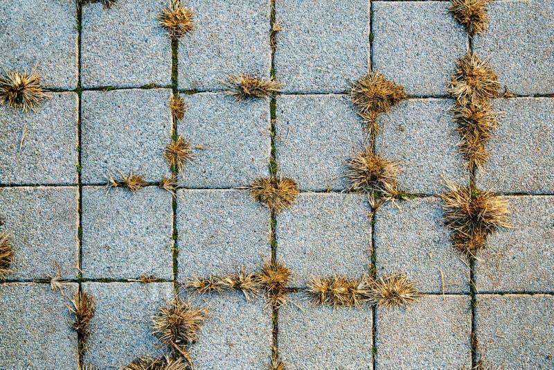 Bruk tekstura charcica Płytka Tło kwadrat wzór zdjęcie royalty free