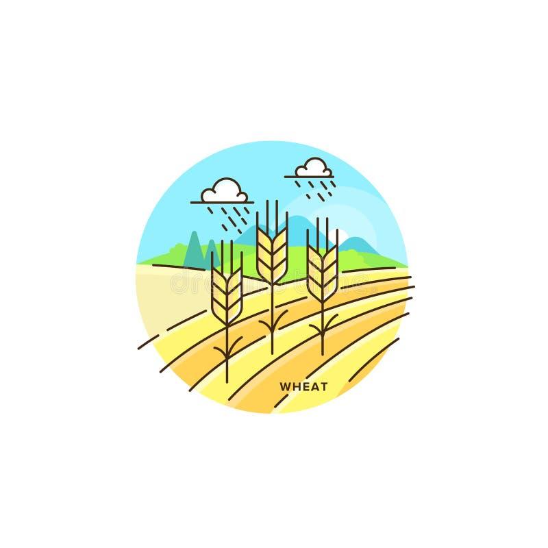 Bruka illustrationen för fältvektorlägenhet i linjär design Vetet och lantgårdlandskapet som isoleras på vit bakgrund eco royaltyfri illustrationer