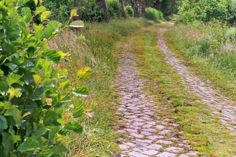 Brukowiec droga w lesie, ścieżka w zielonym lesie w wiośnie obrazy stock