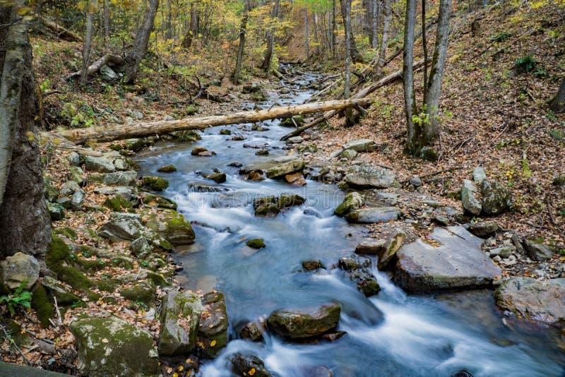 Brullende In werking gestelde Kreek, Jefferson National Forest, de V.S. - 2 royalty-vrije stock foto's