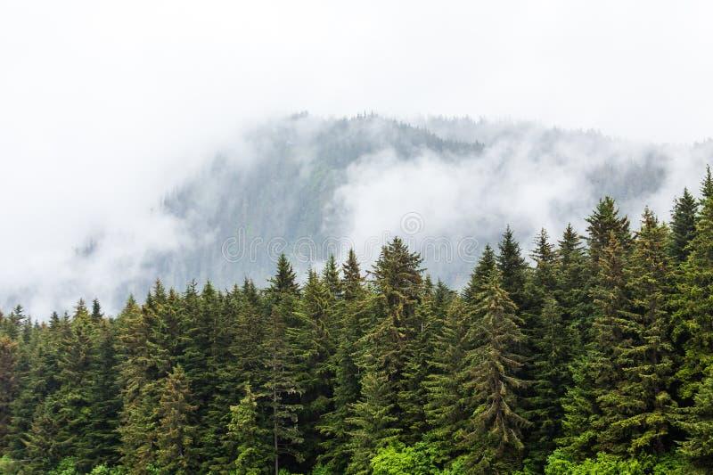Download Brume Au Delà Des Plantes Vertes D'Alaska Photo stock - Image du arbre, evergreens: 76076672