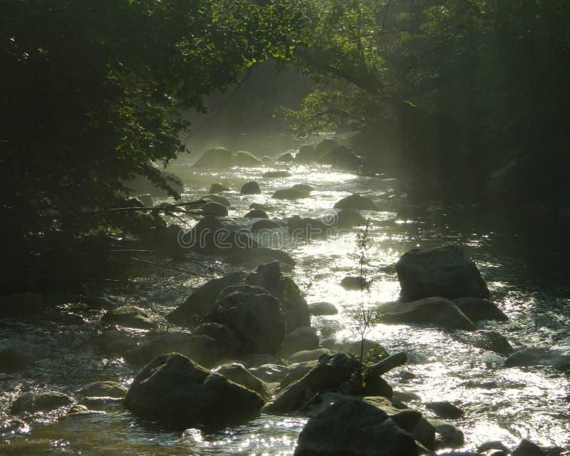 Brume au-dessus de la rivière de montagne photo libre de droits