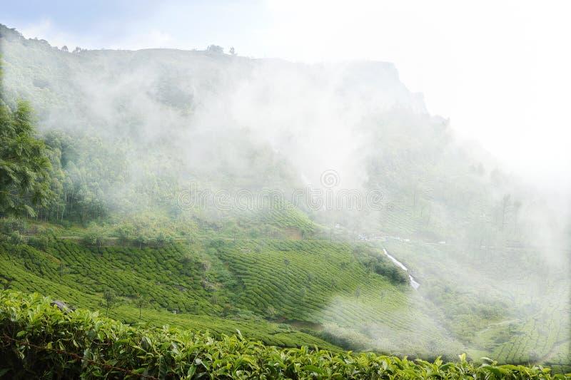 Brume d'hiver au-dessus des jardins de thé de Munnar- image stock