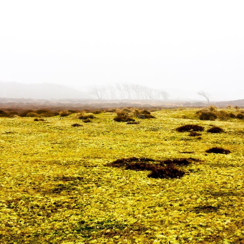 Brume de matin d'automne dans le domaine jaune Silhouettes des arbres dans la distance photos libres de droits