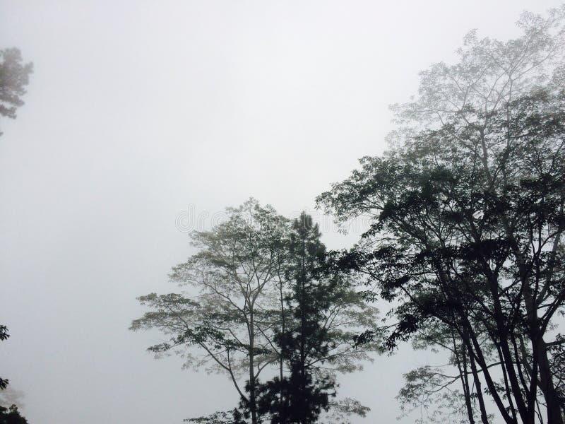 Brume de matin dans l'eliya Sri Lanka de nuwara photos libres de droits