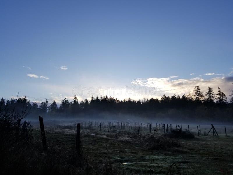 Brume de matin dans le domaine photos stock