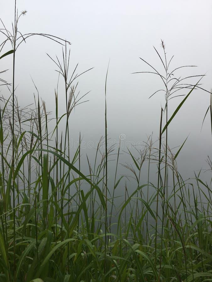 Brume de matin sur un lac image libre de droits