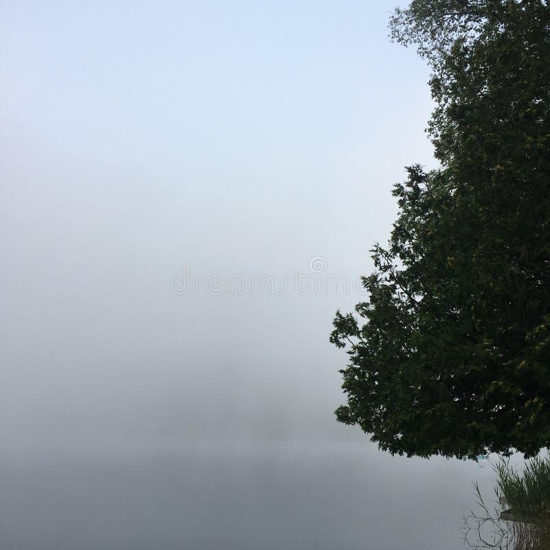 Brume de matin sur un lac photographie stock libre de droits