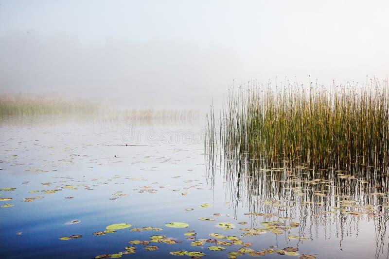 Brume sur un lac à l'aube photo libre de droits