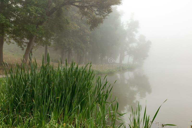 Download Brume sur un lac photo stock. Image du saison, lumière - 77150448