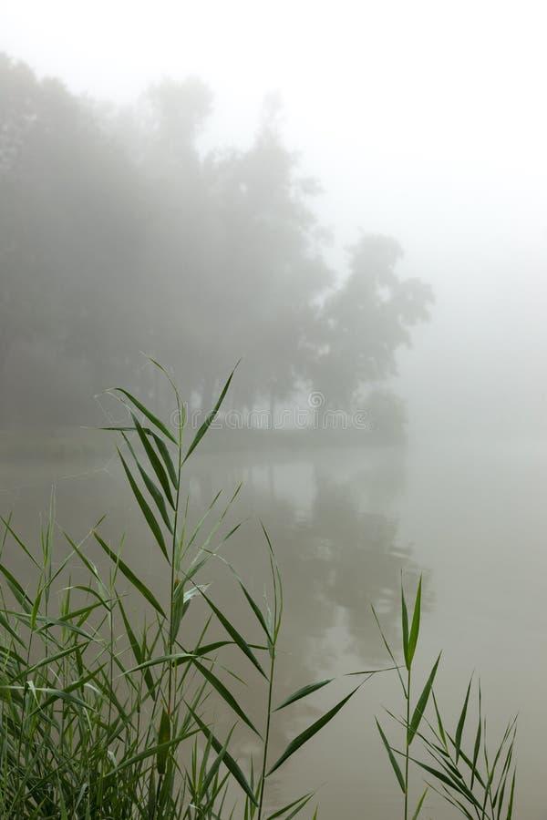 Download Brume sur un lac photo stock. Image du branchement, magie - 77151266