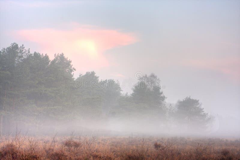 Brumeux amarrez au lever de soleil photo stock