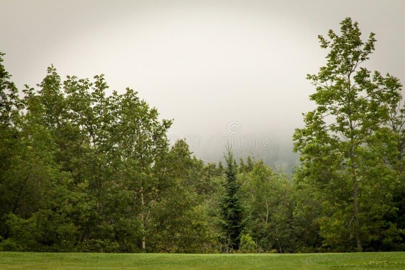 Brumeux donnez sur de la réserve forestière supérieure images libres de droits