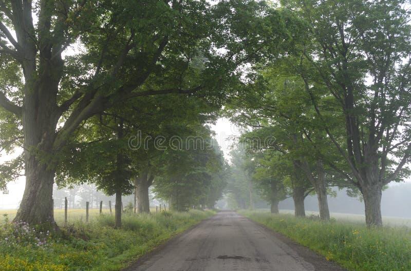 Brumeux, l'arbre a rayé la route photos stock