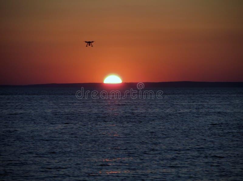 Brummen bei Sonnenuntergang lizenzfreies stockfoto