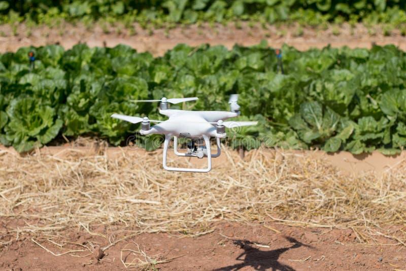 Brummen quadcopter Schwebeflug auf fram, Fliege auf dem Bauernhof lizenzfreies stockfoto
