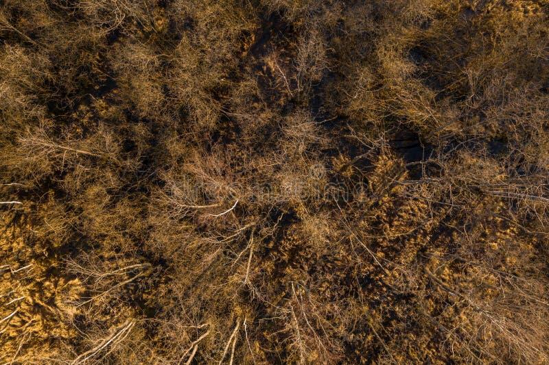 Brummenansicht des Waldes mitten in Sumpf lizenzfreie stockfotografie