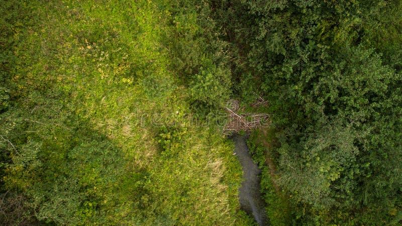 Brummenansicht des Waldes und des Stromes stockbild