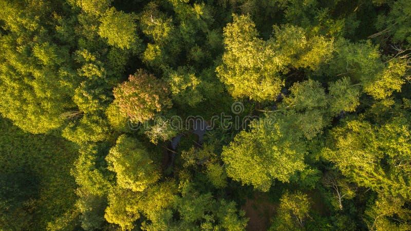 Brummenansicht des Waldes und des Stromes lizenzfreie stockfotografie