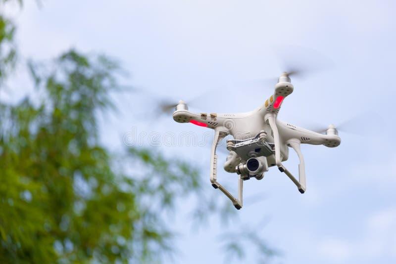 Brummenfliegen bewaffnet mit Kamera stockfoto