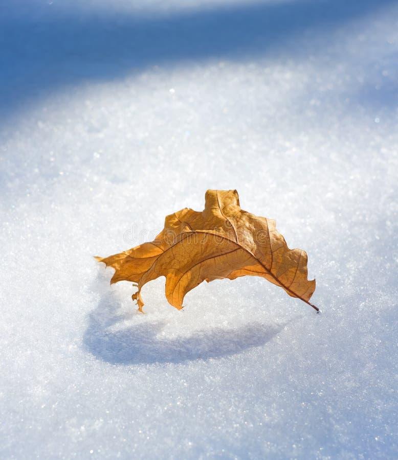 Brun bladavverkning till en tidig snö arkivfoton