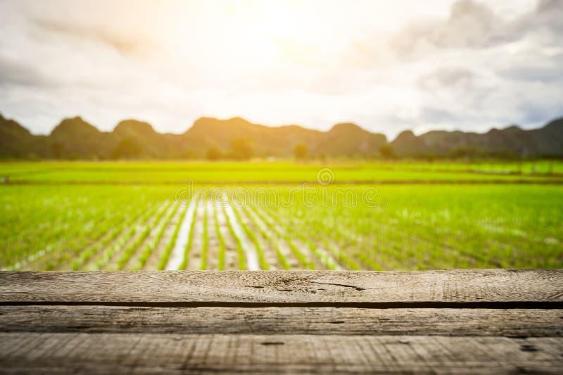 Brun brädesbord tom på Vackra ekologiska, gröna paddy-field royaltyfria bilder