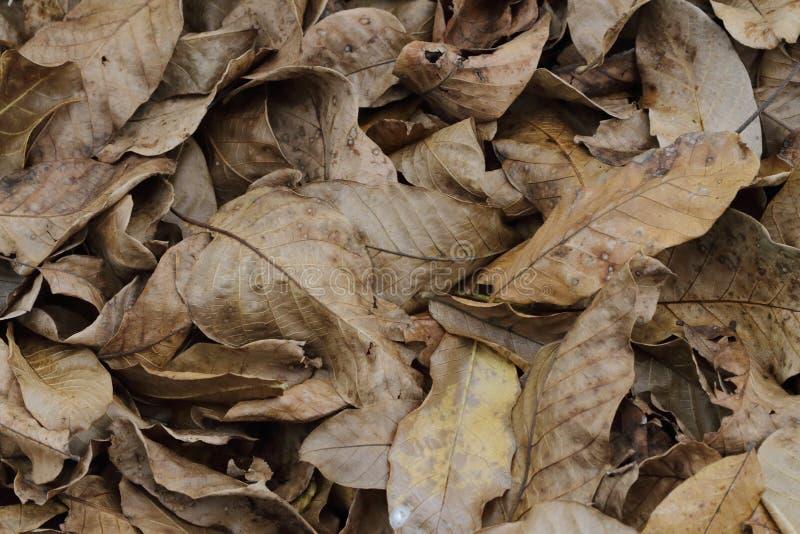 Brun de feuillage d'automne photo libre de droits