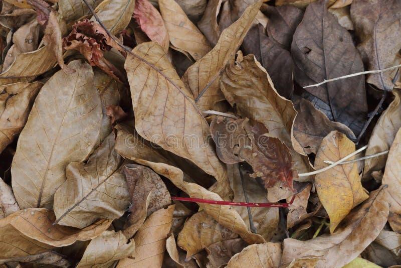 Brun de feuillage d'automne photographie stock