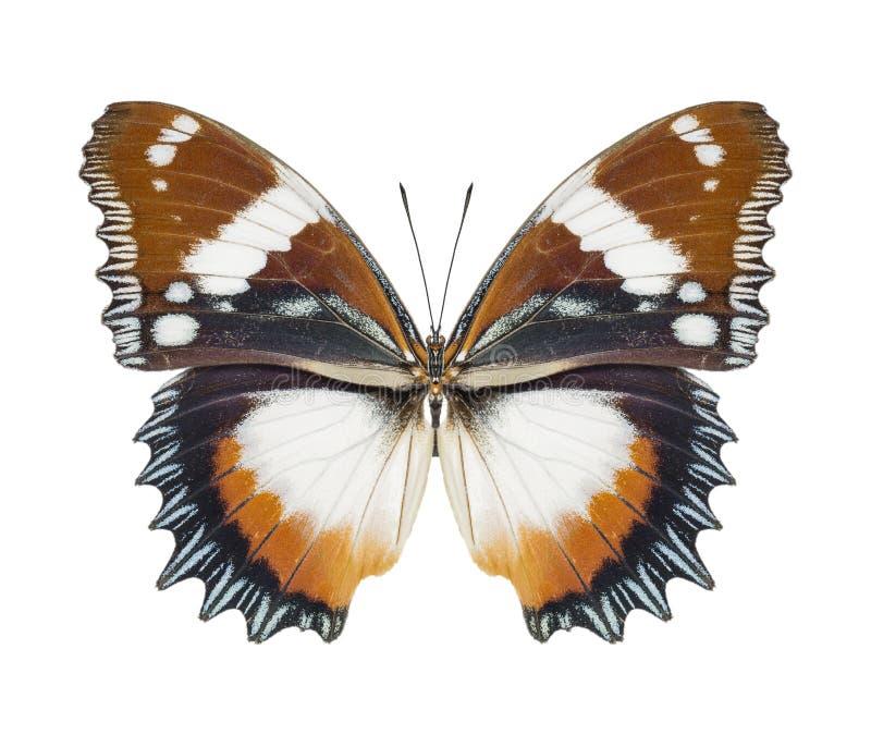Brun de papillon photographie stock
