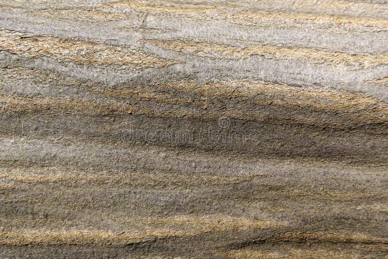 Brun golvtilja, bakgrund f?r formgivare, tr?textur arkivbilder