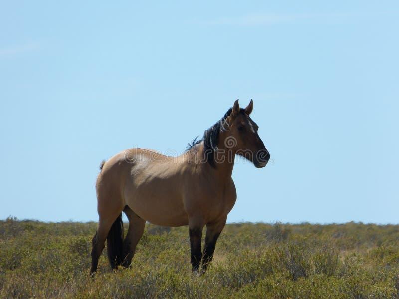 Brun häst i den lösa naturen royaltyfria foton