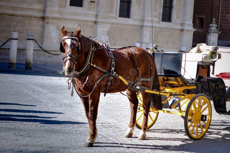 Brun häst i Seville, Spanien arkivfoton