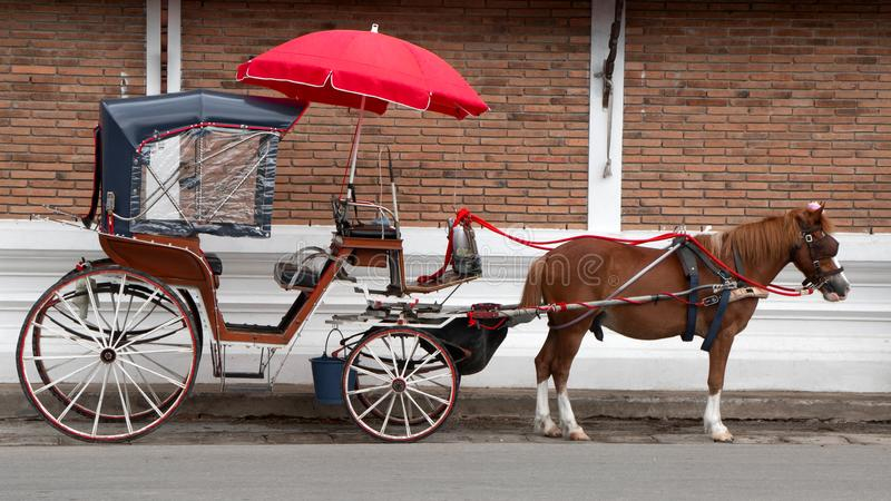 Brun häst med det röda paraplyet i Thailand royaltyfria bilder