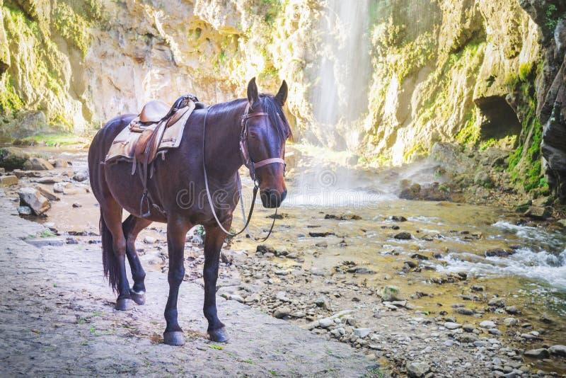 Brun häst på bakgrunden av berg och vattenfallet fotografering för bildbyråer