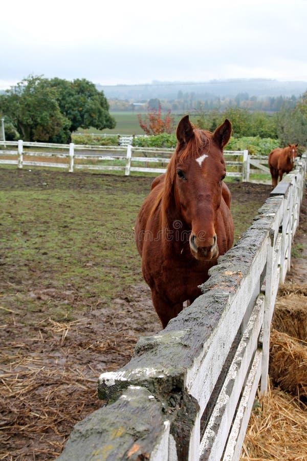 Brun häst på lantgård royaltyfri bild