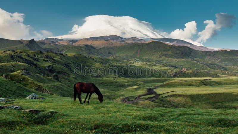 Brun häst som betar i bergängdalen på bakgrund av Mount Elbrus royaltyfria bilder