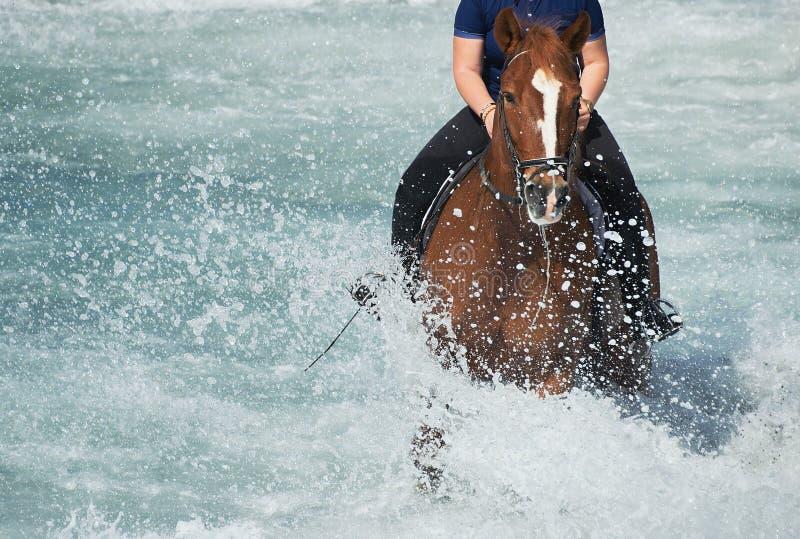Brun hästspring i havet fotografering för bildbyråer