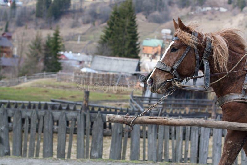 Brun hästspring längs vägen för bergby royaltyfri foto